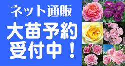 ban_oonae.jpg