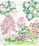 藤川 志朗さん バラと花のイラスト展