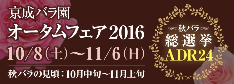 オータムフェア2016 秋バラ総選挙ADR24 [10月8日(土)~11月6日(日)] 秋バラの見頃は10月中旬~11月上旬を予定しています。