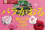 「香るバラ」総選挙 KAORU24