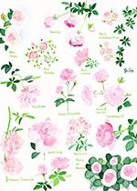 藤川志朗 バラと花のイラスト展